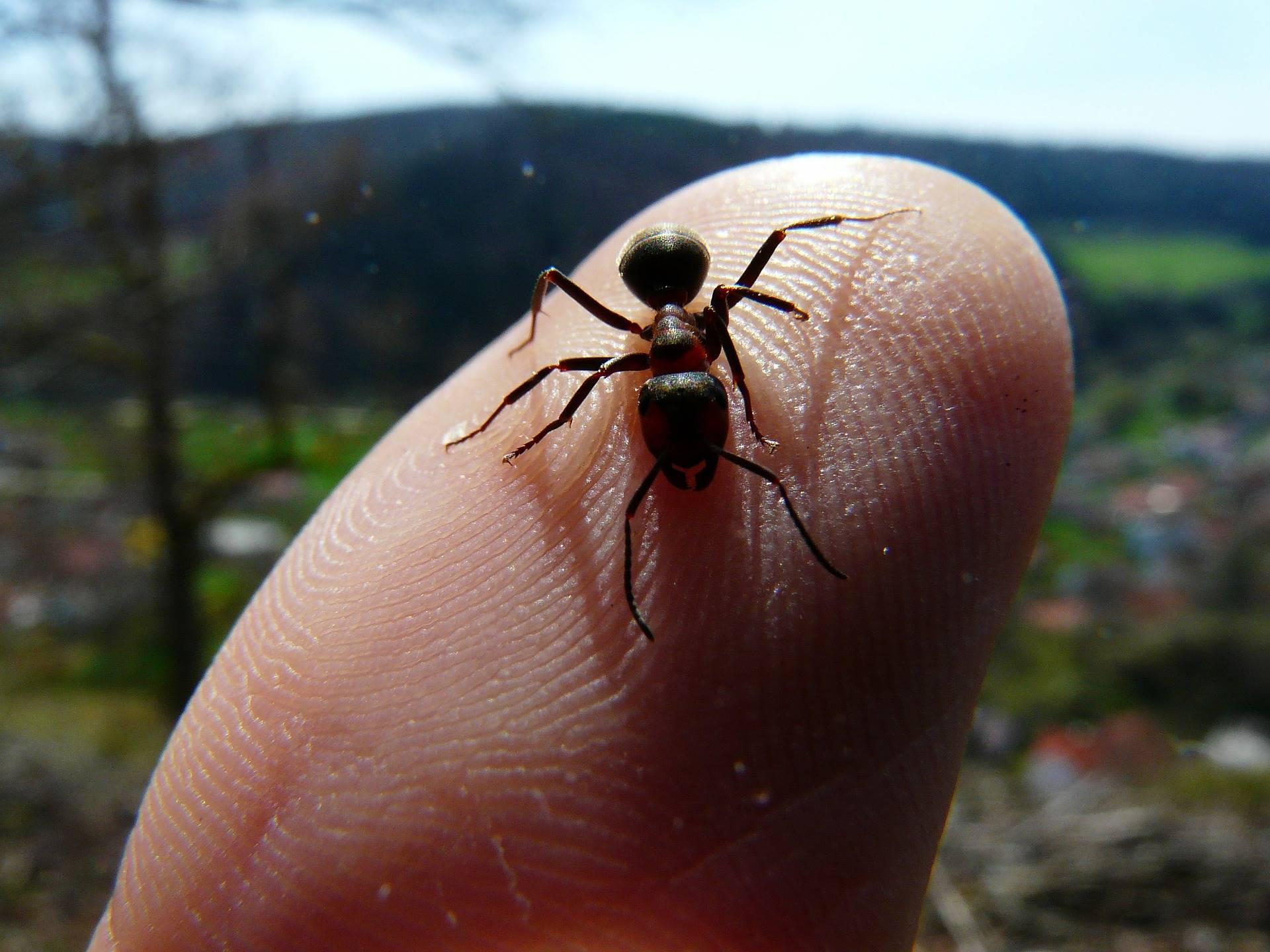 Mieren regeren de wereld, zet de suiker in de koelkast!